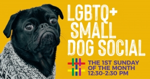 Small Dog Social at Brooklyn Community Pride Center